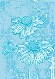 Flower marguerite grunge background Stock Photography