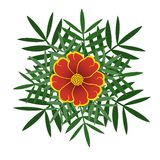 Flower marigold Royalty Free Stock Images