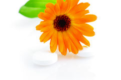 Flower marigold Stock Image