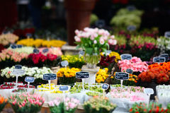 Flower market. Tulips at floating flower market in Amsterdam, The Netherlands Royalty Free Stock Photos