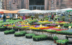 Flower Market. The weekly flower market in Freiburg, Germany Stock Images