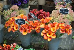 Flower market. REd flowers in a Flower market Stock Photo