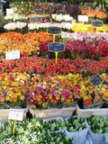 Flower market Royalty Free Stock Image
