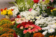 Flower market. Miscellaneous flowers at the flower market Stock Images