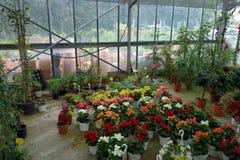 Flower market Stock Images