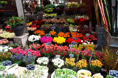 Flower market Royalty Free Stock Photography