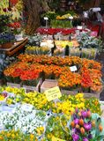 Flower market in Amsterdam Royalty Free Stock Photos