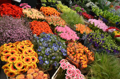 Flower Market in Amsterdam. The floating flower market near the canal in Amsterdam. Colorful flowers are beautifully arranged  in this warm June weekend Stock Photos