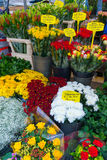 Flower market in Amsterdam Stock Photography