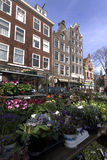 Flower market in Amsterdam jordaan plants Stock Photos