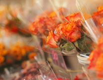 Flower market. Bunch of orange roses royalty free stock photo