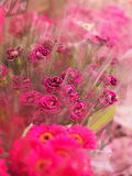 Flower market. Bunch of pink carnations stock photos