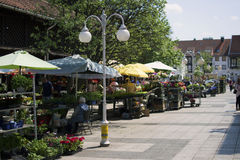 Flower market in city street. Of Eger Hungary Stock Photography