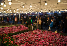 Flower market (cyclamen) Royalty Free Stock Photos