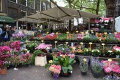 Flower market. In Delft, Netherlands. Stalls and pots with colorful flowers Royalty Free Stock Photo