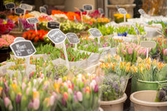 Flower market. A detailed view over the flower market, included price signs, different kind of flower like tulips, hyacinth, lily, etc Royalty Free Stock Image