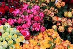 Flower market, Freiburg. Beautiful flowers in flower market in Freiburg im Breisgau, Germany Royalty Free Stock Photo