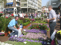 Flower market in Groningen Stock Photography