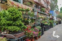 Flower Market in Hong Kong Royalty Free Stock Image