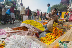 Flower market of Kolkata, West Bengal, India. KOLKATA, WEST BENGAL / INDIA - FEBRUARY 13TH : Buying and selling of flowers in crowded and colorful Mallik Ghat or Stock Image