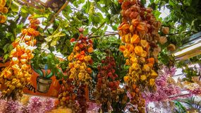 Physalis bouquets at the flower fair royalty free stock photography