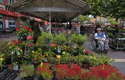 Flower market, Nice, France Stock Image