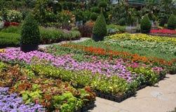Flower market outdoor. Pretty flower market outdoor in America Stock Images