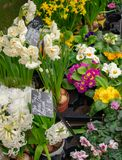 Flower market with pink, white and yellow flowers stock photo