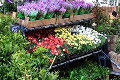 Flower market, Potsdam Stock Photos