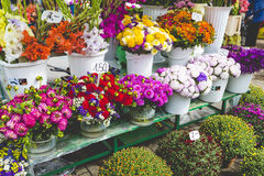 Flower market in Riga, Latvia Royalty Free Stock Images