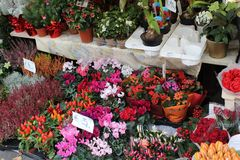 Flower Market Salzburg Stock Photography