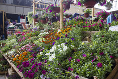 Flower market Royalty Free Stock Photos