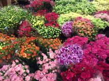 Flower market. At thailand Royalty Free Stock Images