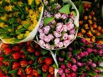 Flower market2. Variegated multicolored tulips on spring flower market, background Stock Images