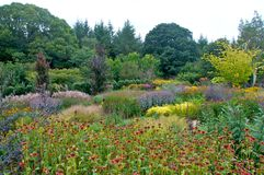 Flower meadow. Spectacular flower meadow planted in Rosemoor Cornwall royalty free stock images