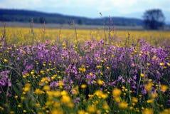 Flower Meadow. Spring meadow full of wildflowers Stock Photo
