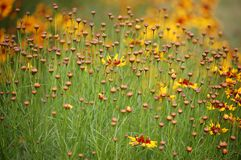Flower meadow. Flower heads and seeds win green meadow Royalty Free Stock Images