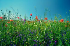Flower meadow Stock Photo