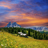 Flower meadow in the Alps at sunset Royalty Free Stock Photo