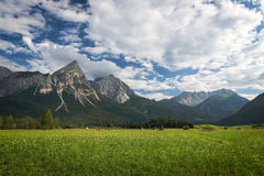 Flower meadow with austrian mountains Stock Image