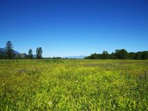 Flower meadow on the background of blue mountains.  Royalty Free Stock Image