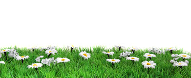 Flower meadow banner Stock Photography
