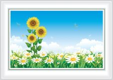 Flower meadow with camomiles and sunflowers. Summer natural landscape with flowers against the sky Stock Photography