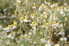 Flower meadow Royalty Free Stock Photos