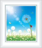 Flower meadow with dandelions and daisies Stock Photo