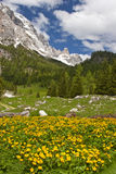 Flower meadow in the dolomites Royalty Free Stock Photo