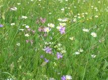 Flower, Meadow, Flora, Grass Stock Photos