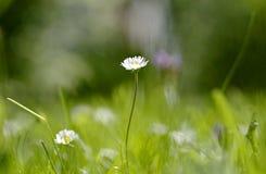 Flower, Meadow, Grass, Wildflower Stock Photos