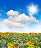 Flower meadow and green grass field over cloudy blue sky. Spring landscape. Sunny day Royalty Free Stock Photos