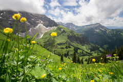 Flower meadow high up in the mountains. Beautiful flower meadow in the Allgauer Alps Stock Photography